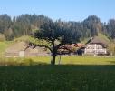 Betrieb_Grossmatt_mit_Baum