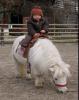 Mini-Shetland Pony Leika
