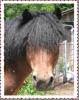 Pony Minka