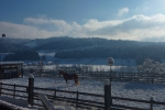 Lucky im Winter.JPG