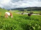Max geniesst mit Minka die Weide