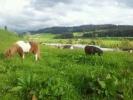 Max und Minka im Gras