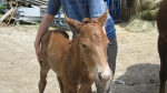 Fohlen Mila 8. Mai 2009 (5)