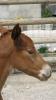 Fotos-2009-Pferde-Hühner-Kühe-Tag-des-Pf-etc-0081