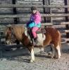 Ponyfan