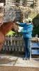 Sytematische Pferdepflege