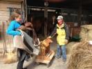Pferd Satteln